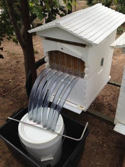 Flow Hive in Flagstaff Hill ready for Honey harvest and Honey extraction